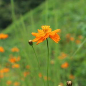 秋の道端で出会った花たち