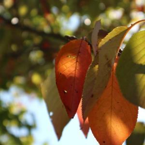 色づきはじめた木々