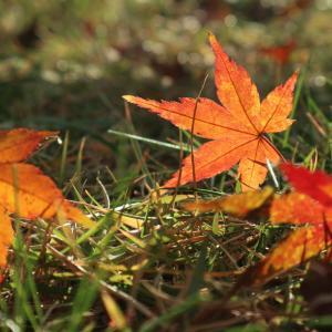 落ち葉が舞い落ちて