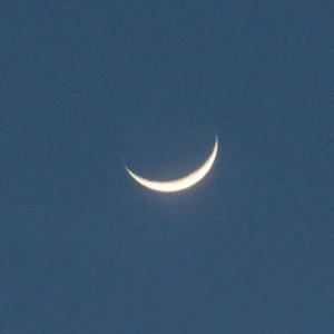 白い月星、金の月星。