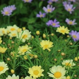もう初夏の頃の花たち