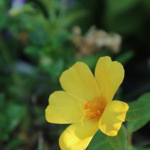 生き返る強い花たち