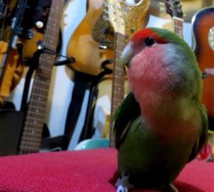 パピネンの殿下ニュース! ことり万博 掛川花鳥園にて2月2と3日に開催されます。