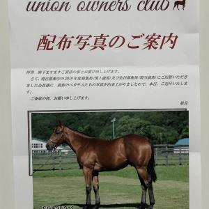 ロードサラブレッドオーナーズ2019年募集馬(出資判断②+まとめ)