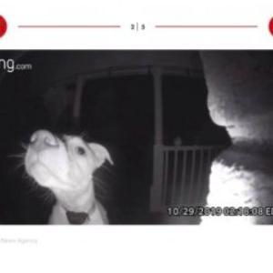 飼い主にうっかり締め出された犬、夜中に帰宅してドアホンを鳴らす(米)<動画あり>