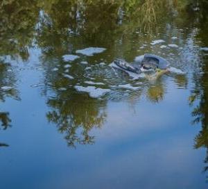貯水タンクから見つかった妊婦の腐乱死体……人々が「水場」に恐怖を感じすぎるのはなぜか