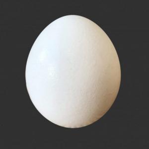 スーパーで卵を一生買いたくなくなる衝撃的事実が話題に