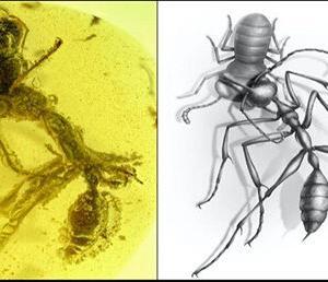 9900万年前の「古代種アリ」が凶悪すぎる 食事シーンを閉じ込めた「激レア琥珀」が発掘される