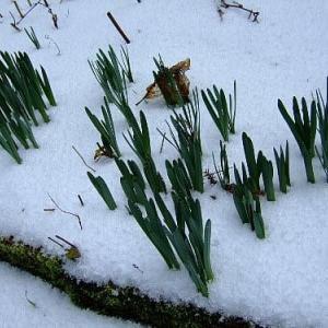 寒い冬の庭で