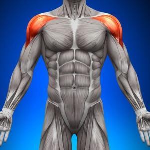 三角筋前部の筋肥大は後部・中部とは頻度が違う!?【肩の筋トレ】