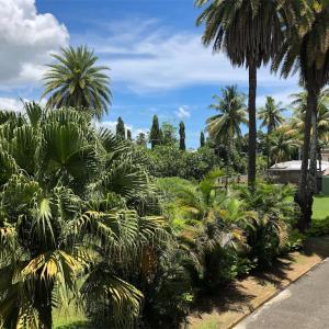 #7 Bula! 飛んだ先は常夏アイランド フィジー&ニュージーランド 旅行記-2