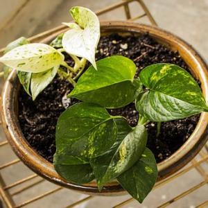 「置くだけで生産性が上がる」観葉植物のすすめ