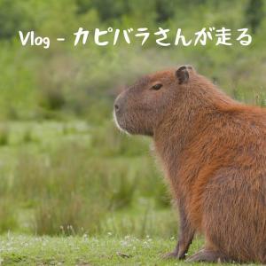 「Vlog – カピバラさんが走る」を公開しました。ランニングのVlog始めます!