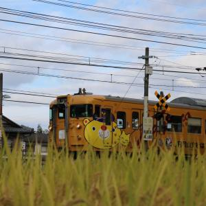 おはようございます☀️ファジ丸君電車🚃💨