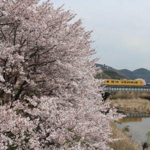 おはようございます☀️食パン電車桜🌸バージョン