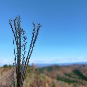 鶏足山&焼森山 青空の下でモンブランコース 2020.11.21