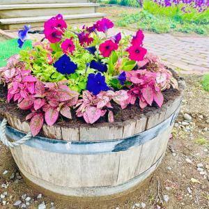 ガーデニングと蜂の巣を駆除する初夏の候