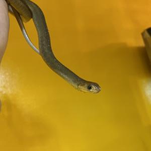 タマゴヘビ!!!