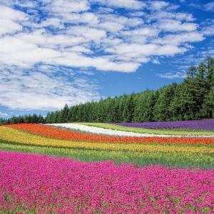 北海道に嫁いだ長女から伝わる幸せな波動。