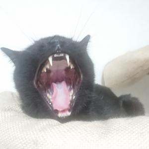 個性って大事! ~同じ黒猫、だけど別の猫~