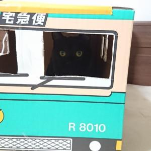 にゃんにゃんにゃんの日の黒猫宅急便♪
