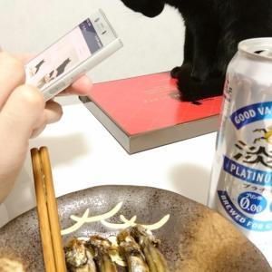 お魚くわえそびれた黒猫 ~かつてないしょぼんぬ(´・ω・`)~
