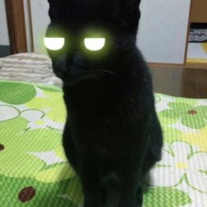 ひたすら自由に ~猫っぽいは褒め言葉なのか?~