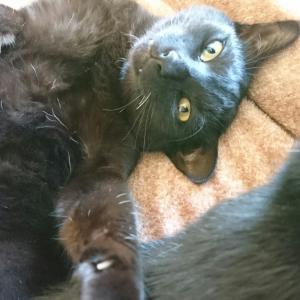 深夜の大追跡 ~黒猫ぺっちゃんの乱~