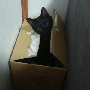 それぞれの黒猫道 ~ぺっちゃんなっつの違い~
