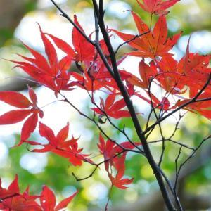 寺で花を学ぶ【11月】