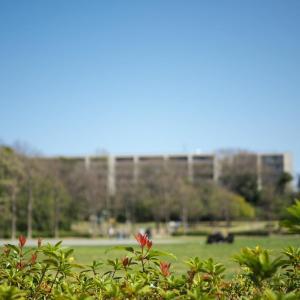 春の久良岐公園