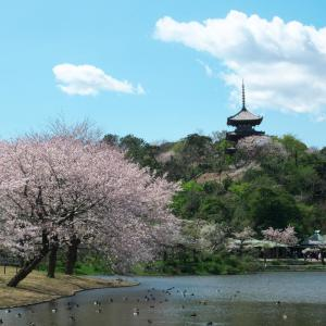 春の三渓園と般若心経