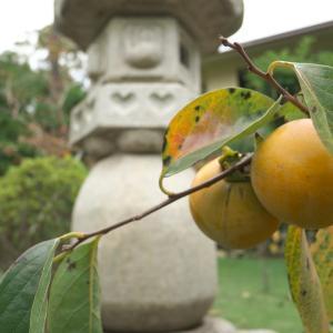 秋の坐禅会【正翁寺④】