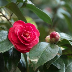 円海山周辺の花【2~3月】