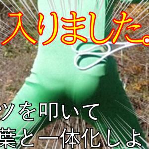緑の全身タイツを着てケツを引っ叩いたら紅葉と一体化できるのか?問題
