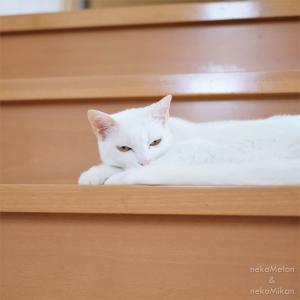 暑い日は、家の中に猫が落ちてます。