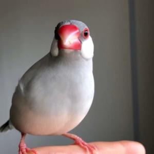 新着研究「鳥の呼吸の仕組み」