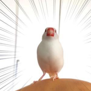 新着研究「文鳥の栄養学―炭水化物」