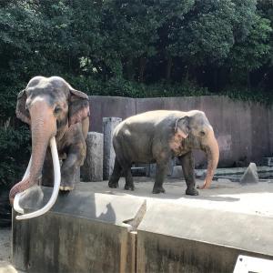 お盆でも空いてる東京近郊の動物園〜横浜市立金沢動物園