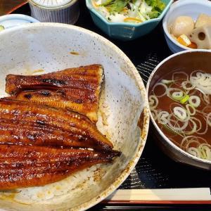 #土用の丑の日 の #鰻ランチ 。 #新橋 「 #正味亭尾和 」で「丸ごと一本破格の #鰻丼 」1,300円!