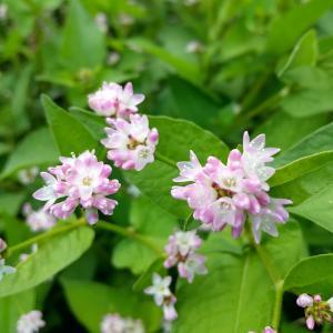 野に咲きまくる花#自然 #植物 #花 #東北 #秋田県 #北秋田市