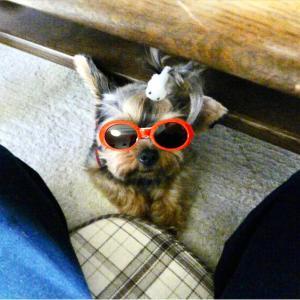 メガネをすると‥