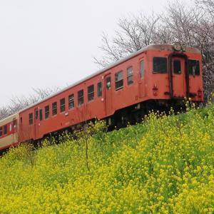 【蔵出し】春爛漫のいすみ鉄道で鉄分補給