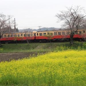 【蔵出し】小湊鉄道のレトロな列車と菜の花