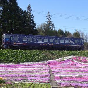 《道南いさりび鉄道》今年の札苅付近の芝桜園は新型コロナウィルスの影響で閉園(立ち入り禁止)に