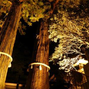 12月31日ちょっと早い詣~朝見神社・表参道の石畳と娚杉