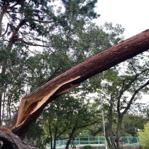 台湾と台風に関する注意事項1