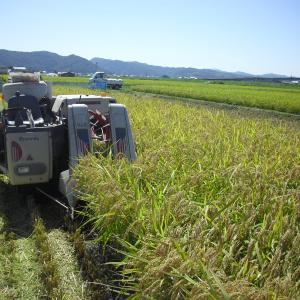 稲刈りと乾燥調製作業