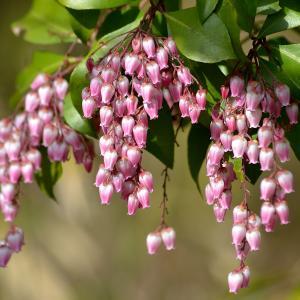 こういう花が好き