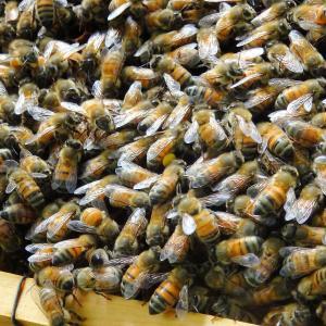 養蜂場へ行く!の巻